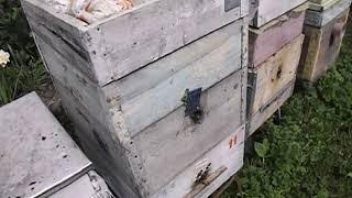 ошибки пчеловода    двухкорпусное содержание пчел