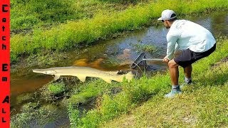 BIG FISH in SHALLOW WATER CREEK!