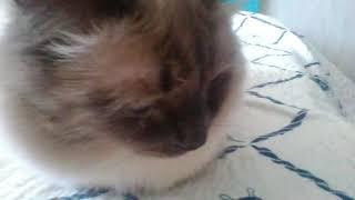 Жизнь кота. 19 серия,3 сезон. Шапка Фредбера! Марафон!
