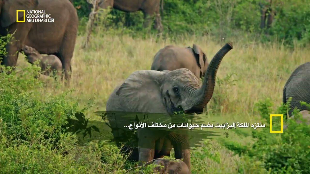أفريقيا البرية | ناشونال جيوغرافيك أبوظبي  - 15:51-2021 / 4 / 21