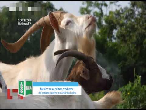 México es el primer productor de ganado caprino en América Latina