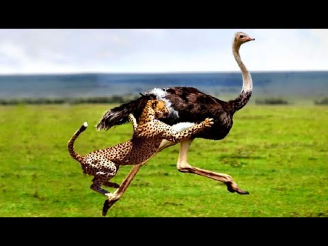 Top 10 Extreme Animal Fights & Attacks