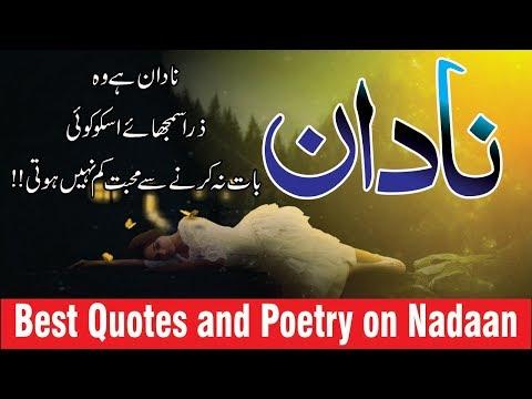 Nadaan Best Quotes And Poetry Urdu Aur Hindi Mein || Golden Words Collection