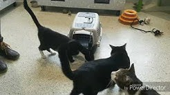 Fear Free Medical Handling at JHS Veterinary Services