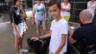 Приют для бездомных… Собаки которых бросили. План Пушкина #18