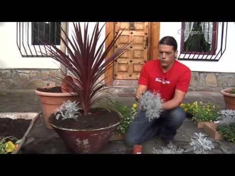 bricomania jardineria - Bricomania Jardineria