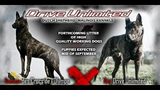 "Drive Unlimited Kennels ""a"" Litter"