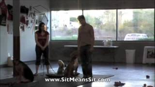 Training A Pack Of Pit Bulls