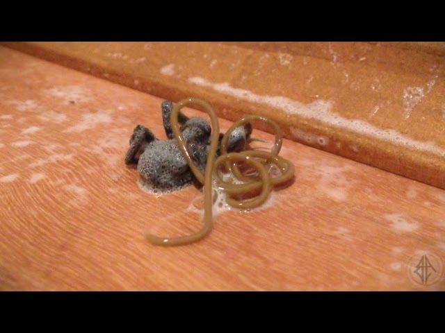 Ubio je pauka u kući, no ono što će uslijediti u narednim sekundama LEDI KRV U ŽILAMA!