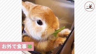 楽しそうにお外で食事中のうさぎさんが可愛い😍【PECO TV】 thumbnail