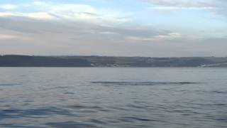Dolphins in Saundersfoot Bay