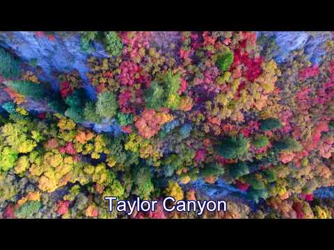 Fall Colors in Northern Utah by Drone