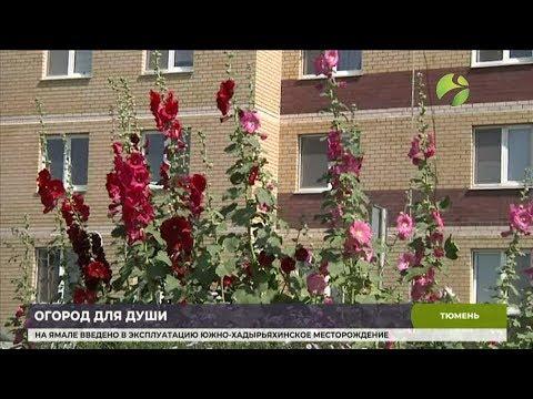 Переселенцы с Ямала занялись садоводством в Тюмени