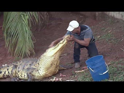 Campesino tiene a cocodrilos como mascotas