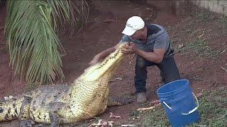 Campesino tiene a cocodrilos como mascotas thumbnail