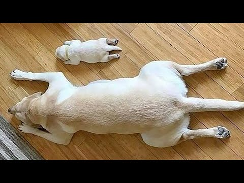 AWW CUTE BABY ANIMALS Videos Compilation Funniest and cutest moments of animals - Soo Cute kiki #15
