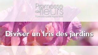 Diviser un Iris des jardins, vidéo jardin