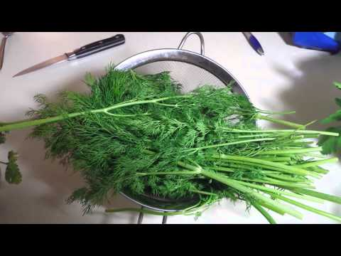 Health benefits of Dill Weed!