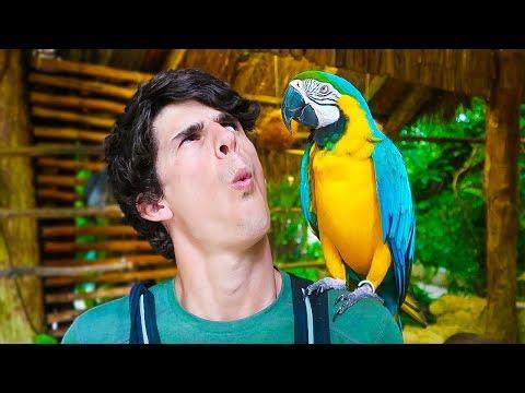 THE BIRD CAN TALK!