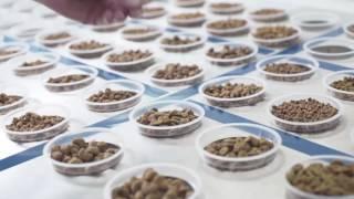 ロイヤルカナンの品質・食品安全性について