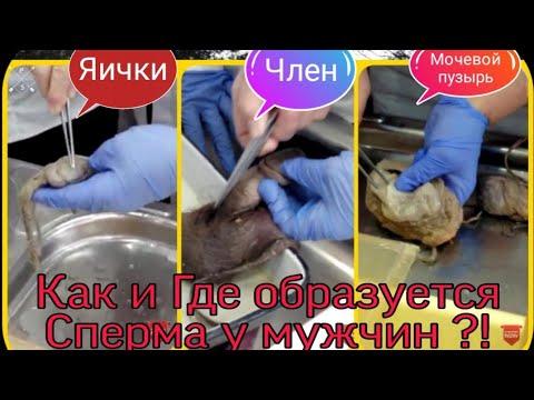 Простатит (лат. prostatitis) Предстательная железа #Анатомия
