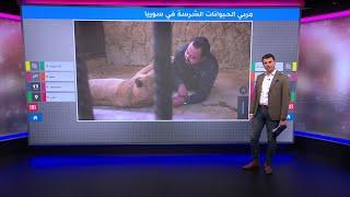 أسد ونمر ودب يعيشون مع رجل سوري في دمشق