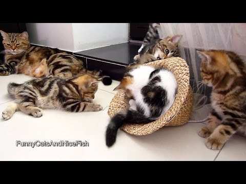 Funny Cats and Hat
