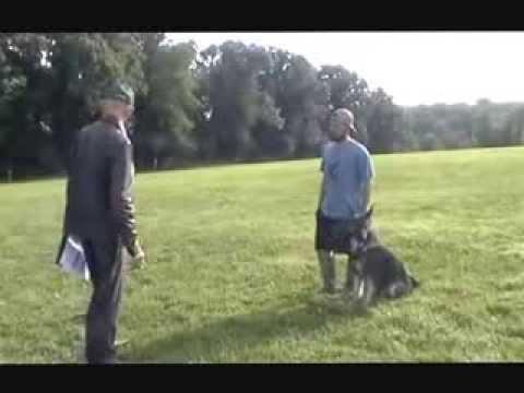 patrick-fitzgerald-&-falk-vom-wellington-schutzhund-bh-routine