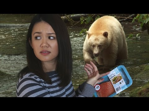 If Ordinary People Filmed Nature Documentaries