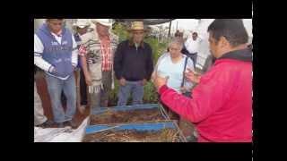 Presentación del proyecto  agrícola: Biomasa y rendimiento de chile manzano y asociación con durazno
