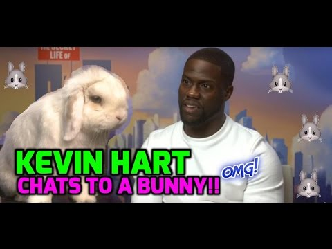 The Secret Life of Pets: Real bunny rabbit interviews Kevin Hart!