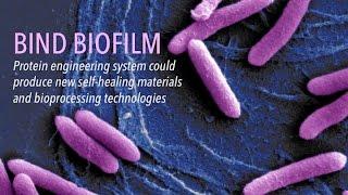 BIND Biofilm