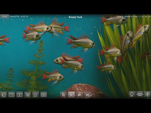 40 Fish in a Biotope aquarium - Biotope |
