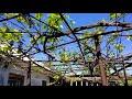 Casa de vinzare or. Floresti