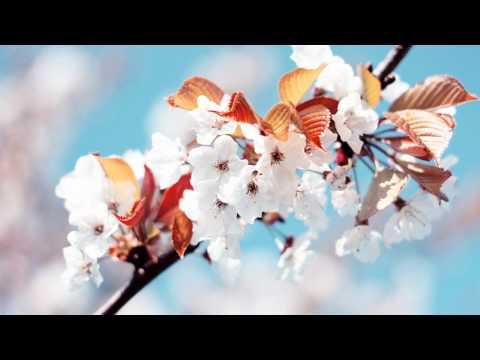 Garden in my room - Merril Bainbridge (Lyrics in description)