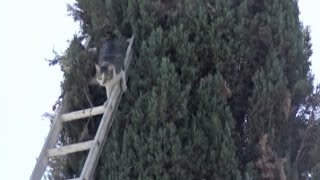 Cat Stuck Up Tree For Four Days