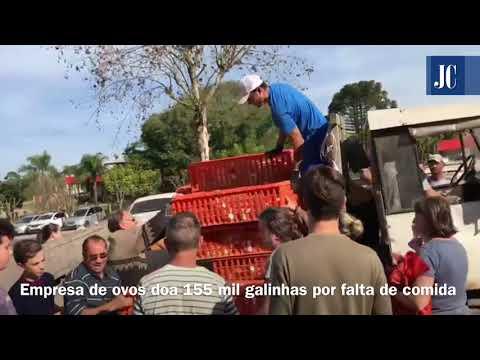 Empresa distribui milhares de galinhas no Rio Grande do Sul