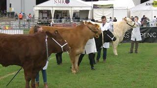 Trinwyr Ifanc y Gwartheg - Dydd Iau | Young Cattle Handlers Thursday