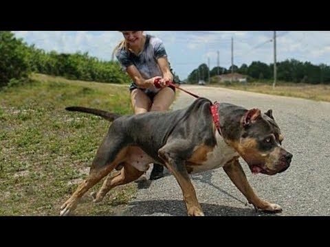 top-10-best-dogs-for-first-time-owners