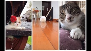 The cutest, cute cats and dogs part 3