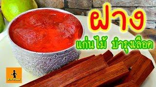 ฝาง น้ำต้มแก่นฝางดื่มเพื่อสุขภาพบำรุงเลือด วัตถุดิบทำน้ำยาอุทัยทิพย์ สมุนไพรไทยสรรพคุณแก้ร้อนใน