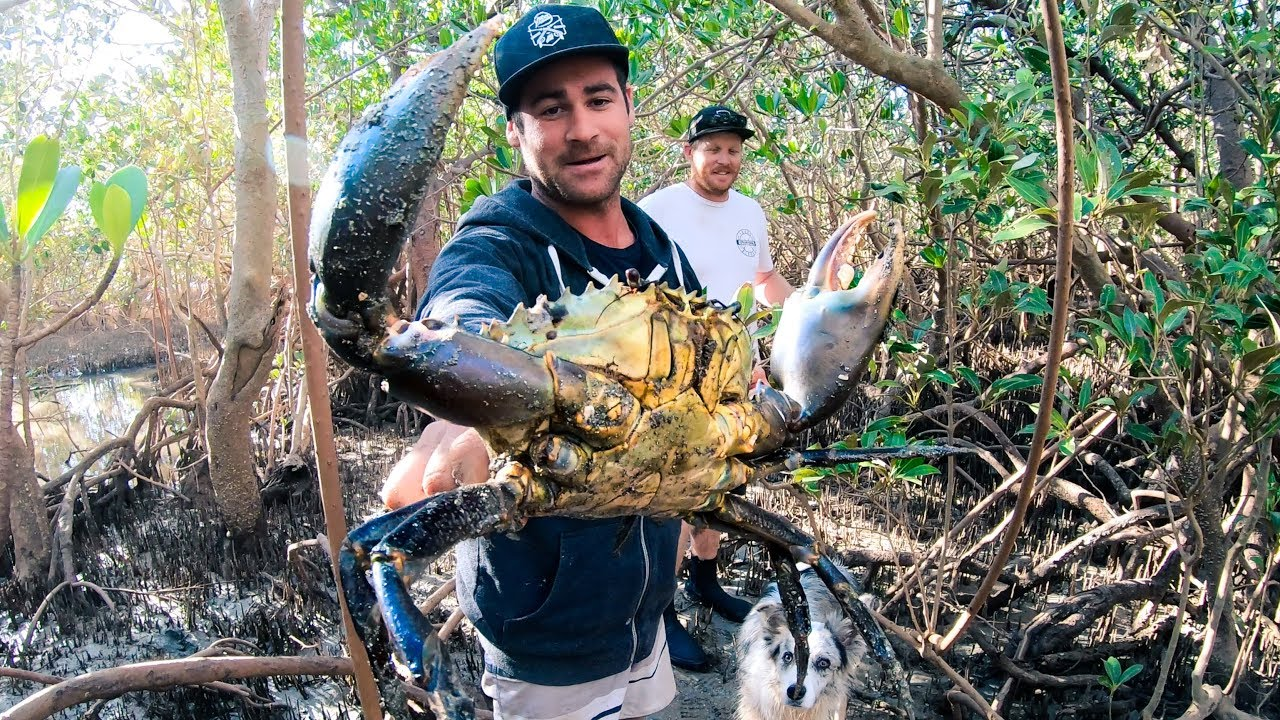Download GIANT MUD CRAB Catch And Cook Camp Fire (Rock Knife And Flint) - Ep 90