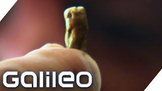 Ein Leben als Goldgräber | Galileo | ProSieben
