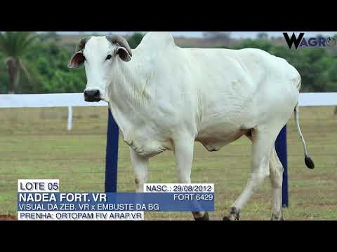LOTE 05   FORT 6429