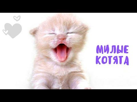 Вопрос: Какие котята самые милые?