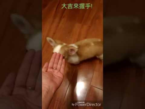 怡如家的娃娃,大吉 : 大吉來  握握手