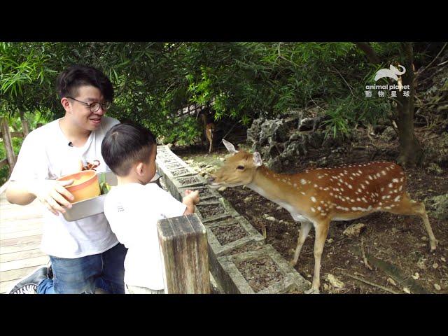 【一日動物照護員】前進壽山動物園!幫黑熊藏水果做椰子冰|動物星球頻道