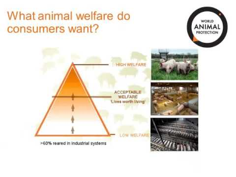 Dr. Lesley Mitchell - Connecting with consumers: Animal welfare in the sustainability story