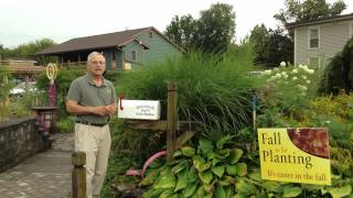 Landscape Design - What To Plant Around A Mail Box