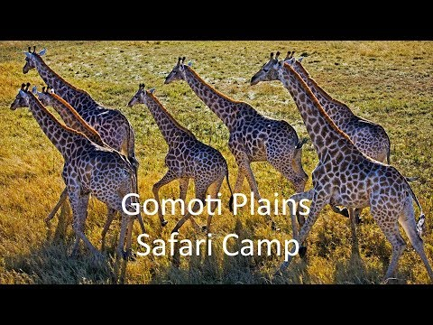 Gomoti Plains Luxury Safari Camp, Botswana